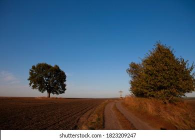 Eine einsame große Eiche und ein Kreuz mitten auf einem landwirtschaftlichen Feld. Herbst. Heilige Eiche nahe der heiligen Quelle des heiligen Sergius von Radonezh, Russland, Region Rjasan, Dorf Krasny Ugol.