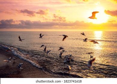 夕方の海景。海に沈む夕日。ビーチを飛んでいるカモメ。夕方の大西洋、ポルト、ポルトガル、ヨーロッパ