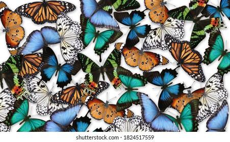 Viele verschiedene helle Schmetterlinge auf weißem Hintergrund