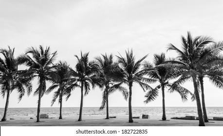 Schwarzweiss-Ansicht des schönen Strandes mit Palmen, Thailand