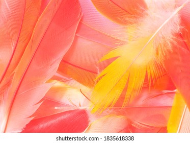 Beautiful soft pink orange color trends feather pattern texture background