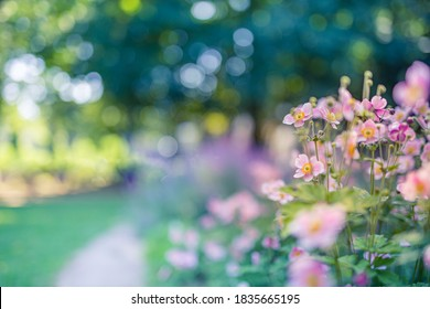 Spring forest landscape purple flowers primroses on a beautiful blurred background macro. Floral nature background, summer spring background. Tranquil nature close-up, romantic love flowers