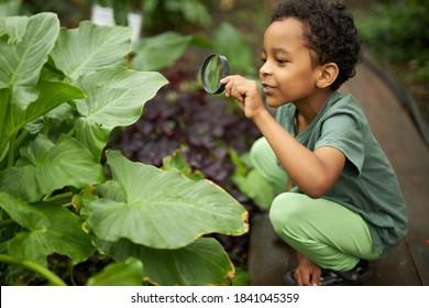 kleiner afroamerikanischer kindjunge betrachten pflanze mit lupe, wollen über natur alles wissen, lernen gartenarbeit und pflanzen, blumen