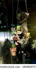 庭の植物とぶら下がっているミニ人形、植物とかわいい人形