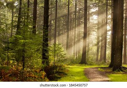 Waldbäume Sonnenstrahlen Weg am Morgen. Sonnenstrahlen Waldbäume. Sonnenstrahlen im Morgenwald. Waldweg im Sumbeam-Morgen