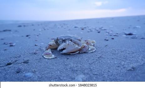 Die Krabbe im Sand am Strand am Meer