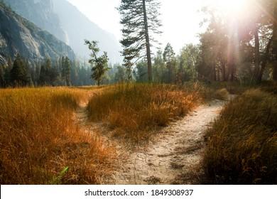 森を背景にした牧草地の真ん中で分岐する2つの小道