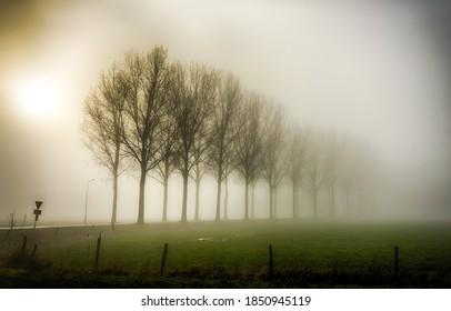 霧霧の中の木。霧のかかった田舎の屋外の霧。霧の霧のシーンの木。木霧霧