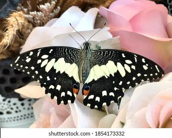 Hermosos y maravillosos colores de una mariposa en las dulces rosas en el rincón vintage