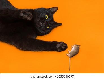 Schwarze Katze spielt mit einer besiegten Maus auf dem Hintergrund eines orangefarbenen Bodens