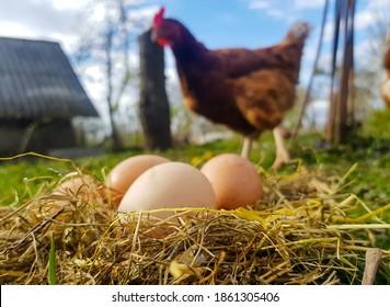 干し草の巣の中の鶏の卵。巣の背景には鶏が立っています。モックアップからの写真