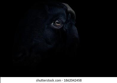 schwarzer Ziegenkopf lokalisiert auf schwarzem Hintergrund (Vignette)