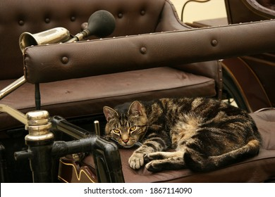 cat lying on the sofa of an antique car or oldsmobile