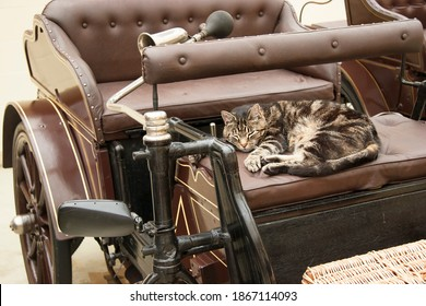 sleeping cat lying on the sofa of an antique car or oldsmobile