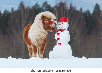 雪だるまのニンジンの鼻を食べようとしている面白いミニチュアシェトランドポニー。冬の馬。