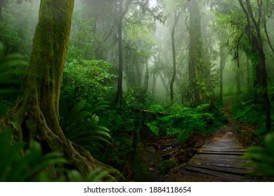 Tropischer asiatischer Dschungel mit Holzbrücke