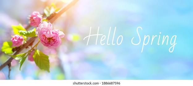 Schöne Naturszene mit Mandelbaumzweig in voller Blüte und blauem Himmel im zeitigen Frühjahr. Zarter rosa Blütenkopf im Sonnenlicht, Nahaufnahme. Frühlingsblütenblumenfahne mit Worten Hallo Frühling.
