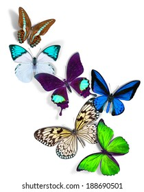 group of a butterflies on white background