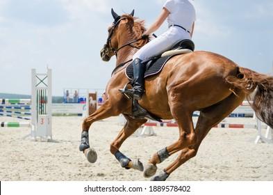 Rotes Sportpferd, das sich im Sommer im Galopp auf den Springreitwettbewerben im Freien bewegt