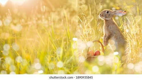 Conejito de Pascua con una canasta de huevos. Conejito de Pascua feliz en una tarjeta sobre sus patas traseras con flores al atardecer. Liebre linda