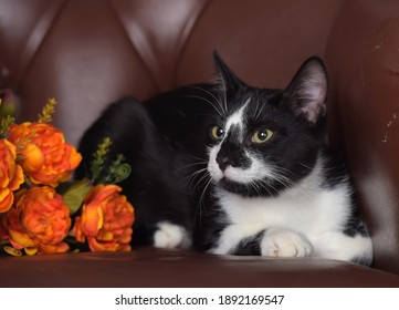 white with black cat on a brown background and orange roses bouquet