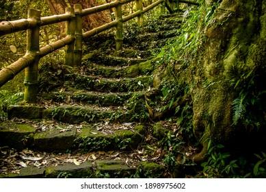 森の中の階段と竹のレール、陽明山台湾
