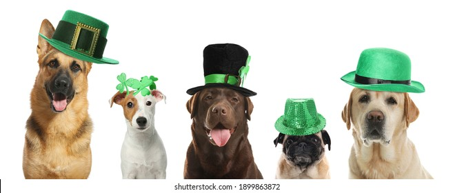 Cute dogs with leprechaun hats on white background, banner design. St. Patrick's Day