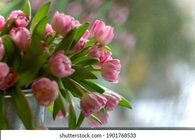 Un gran ramo de tulipanes rosas en un primer plano de cubo de hierro se encuentra en la ventana a la luz del día. Flores de primavera como regalo para mujeres y niñas para las vacaciones del 8 de marzo. Composiciones florales.