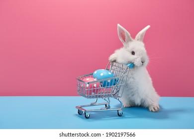 Weißes Osterhasen-Kaninchen mit Einkaufskorb und gemalten Eiern auf blauem und rosa Hintergrund