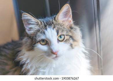 Un lindo gato mirando a la cámara.