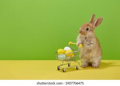 Conejo de Pascua con cesta de la compra y dulces huevos coloridos sobre fondo verde y amarillo