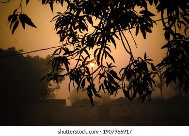 Blick auf die Sonne von den Blättern.