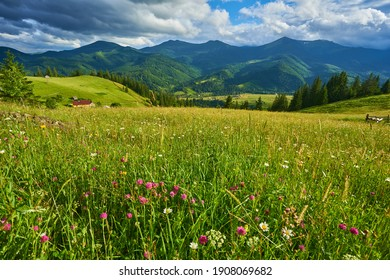 Frühling in den Alpen mit Bergen und Blumen