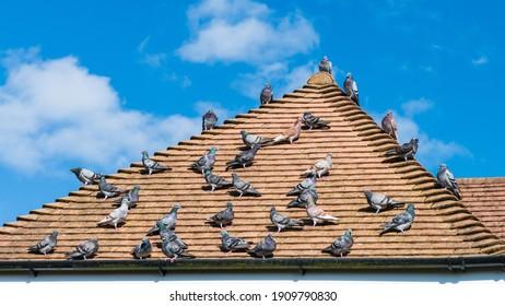 屋上に座っているハトの群れのショット。