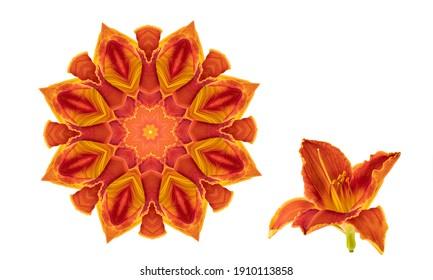 オレンジ色の円形の花柄の白い背景で隔離。万華鏡。花の日ユリ