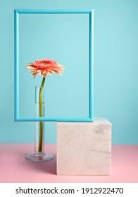 Borde de marco de primavera con gerbera en florero sobre fondo azul y rosa. Concepto floral contemporáneo mínimo. Maqueta para publicidad. Copie el espacio para texto o cita inspiradora y motivadora.