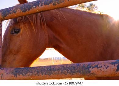 農村部の西部牧場でのブラウンバレル競走馬