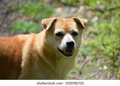 かわいい子犬の犬のクローズアップビュー、素敵な愛撫のかわいいキャニー犬、スクービードゥー犬の品種のような私の甘い犬、混合毛皮のような形をした犬グレートデン、愛撫のかわいい子犬は私を探しています、とても素敵です
