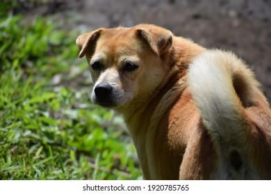 かわいい子犬の犬のクローズアップビュー、かわいい子犬の犬は私を見ています私の赤ちゃんの犬のペット私の甘い心の動物かわいい子犬、犬の毛皮の尾