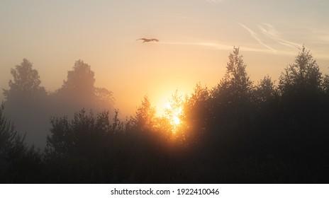 Nebliger Frühsommermorgen mit pastellfarbenem Sonnenaufgangshimmel, Baumsilhouetten und fliegender starker Silhouette