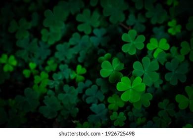 小さな緑のクローバーは、パターンの背景、自然と聖パトリックの日の背景、シャムロックの壁紙を残します。休暇と休日のクローバーのシンボル、春のコンセプト。