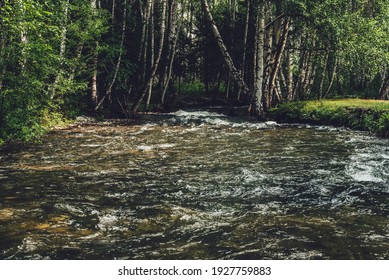 Scenic landscape with small river in birch grove in vintage tones. Atmospheric forest scenery with green mountain river with transparent water and stony bottom. Clear water in beautiful mountain brook