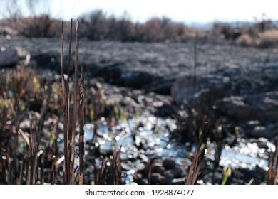 Následky lesného požiaru. Následky požiaru v mokradiach.