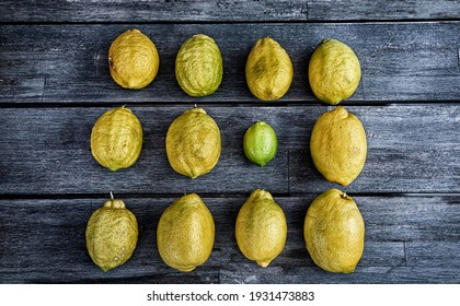 Artistic rendering of a group of lemons and one lime arranged in a square