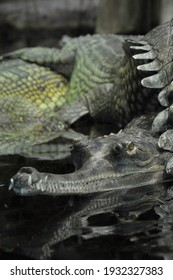 Toothy crocodiles in an overgrown swamp-like lake.