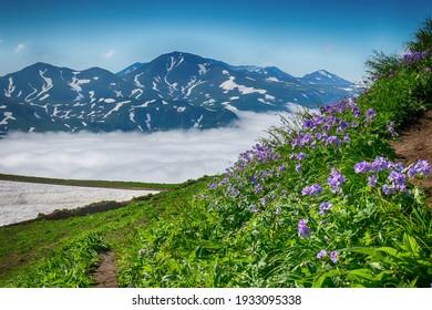 山々の美しい景色、カムチャッカ。美しい雲があなたの足元にあります。手前に鮮やかな青い花があり、左側に雪があります。