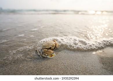 Die Krabbe am Sandstrand mit schöner Hintergrundfarbe
