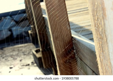 Close-up of a geometrically perfect spider web in the midday sun