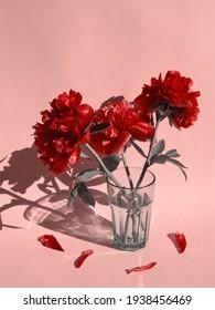 Ram de flors de peònia rosa en aigua de vidre i pètals de color rosa sobre fons rosa de nadó. Roses roses de primavera. Concepte de flors mínimes. Disseny o plantilla, espai de còpia, vertical. Estètica minimalista