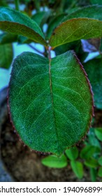 Leaf HD Wallpapers and plant leaf
